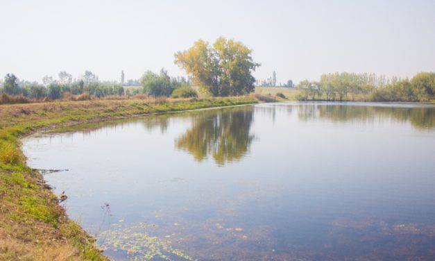 Asociación Canal Maule advierte que Reforma  al Código de Aguas perjudicará a los agricultores